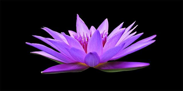 輪廻転生と花
