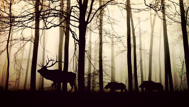人間と神と動物