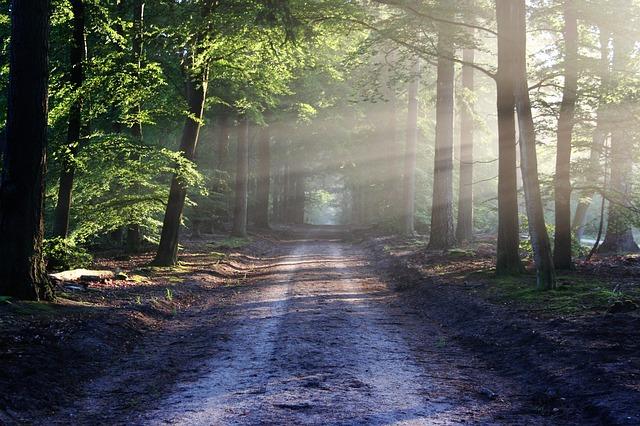 命,神への道,選択