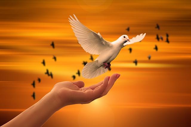 神の手から飛ぶ鳩