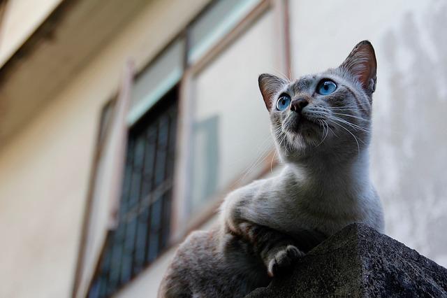 ヴェジタリアン猫