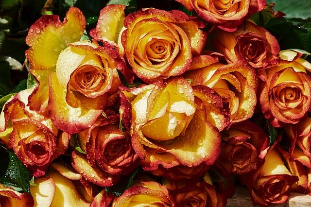神の創造されたバラ