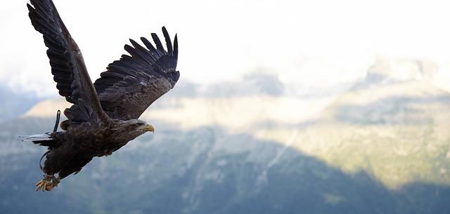 鷹大空を優雅に飛ぶ