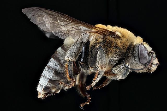 蜂は殺される