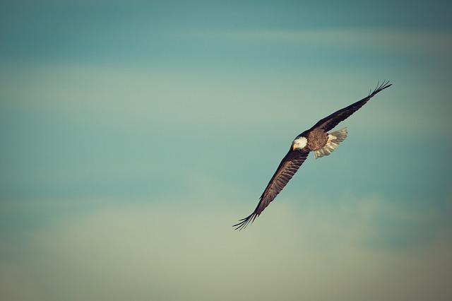 鷲が神に土りたいと願う諏方