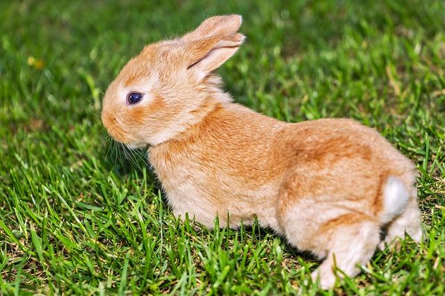 神の七つの掟を教えるウサギ