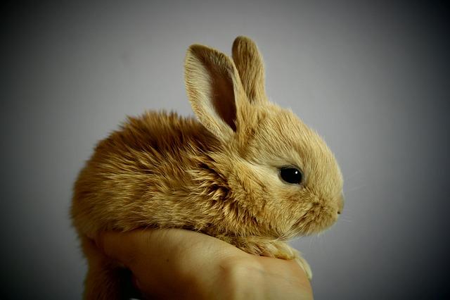 神のつかえのウサギ