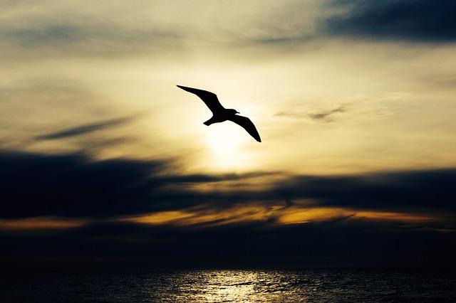 未来は見見えない鳥