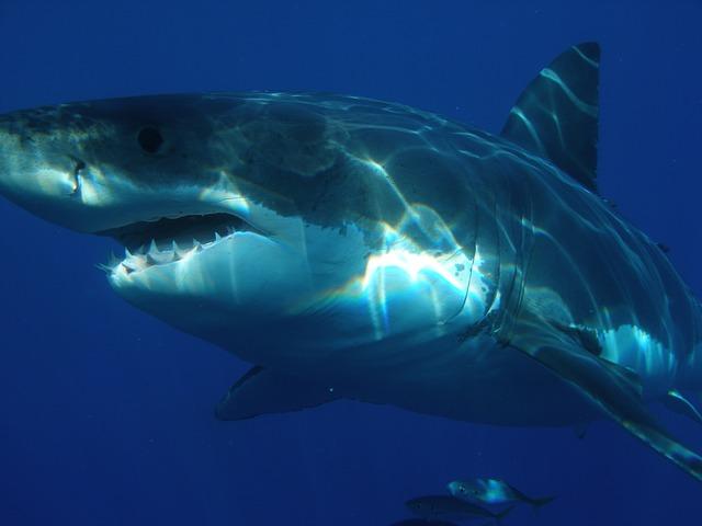 サメになった少年