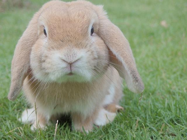 自ら死を選んだウサギ