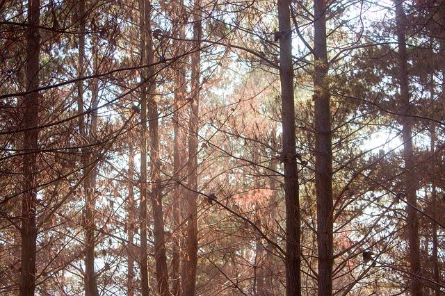 木と神の出会い