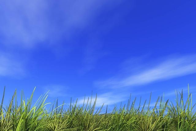 遥かなる草原