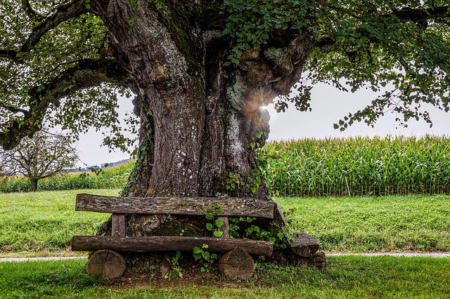 大木の神の姿