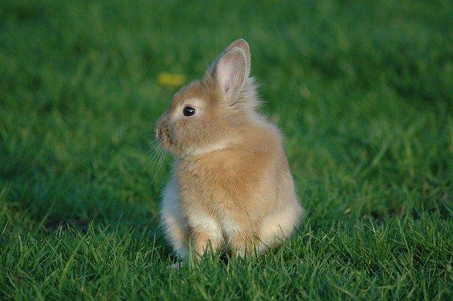 神とウサギの話