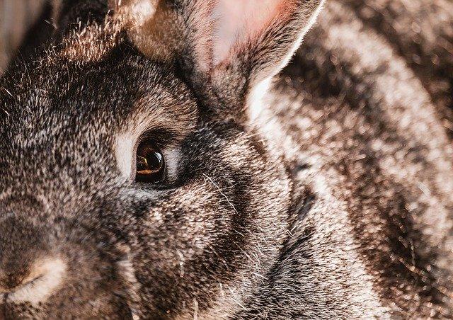 ウサギの恐怖の目