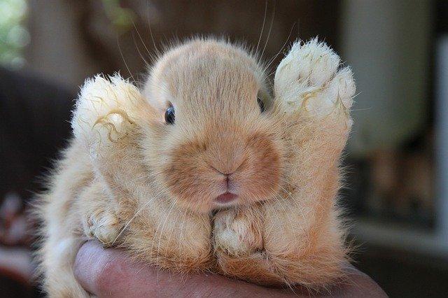 可愛いウサギのこと神様