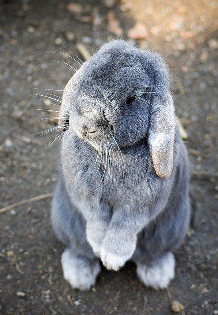 ママウサギのイメージ画像