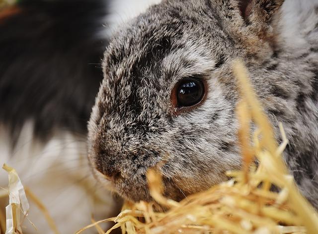 ママウサギの涙