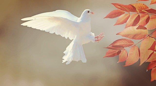 神と鳩の子