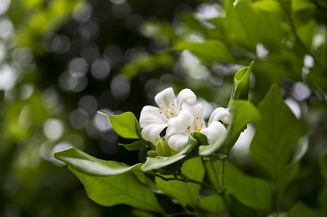 神とみかんの花