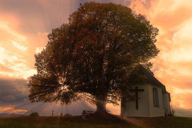神の木を持つ男