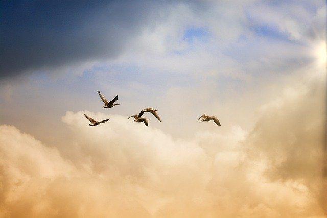 神の七つの掟