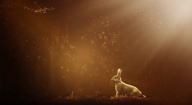 ウサギと神