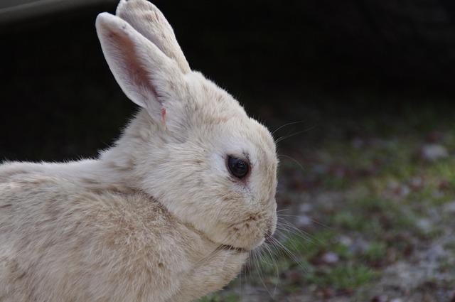 劣悪な環境のウサギ