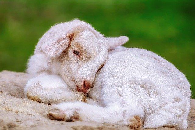 動物からの憐れみ